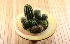 Free Cactus Stock Images - 4553434