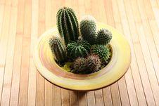 Free Cactus Stock Photo - 4553440
