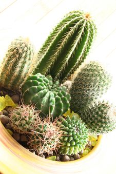Free Cactus Stock Images - 4553454