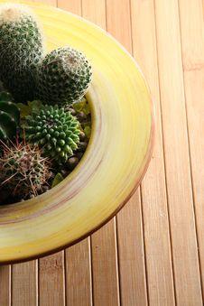 Free Cactus Stock Photo - 4553510