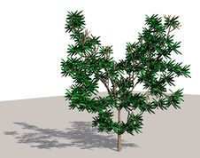 Free Tree With Shadow Stock Images - 4553564