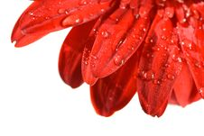 Free Red Petals Stock Photo - 4554190