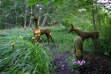 Free Deer Family Royalty Free Stock Photo - 4554205