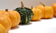 Free Pumpkins And Gourd Royalty Free Stock Photos - 4554208