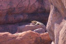 Lion Sleeping On Rocks Royalty Free Stock Photos
