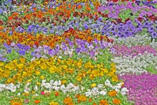 Free Carpet Of Flowers. Royalty Free Stock Photography - 4555477