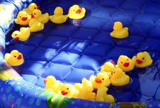 Free Rubber Ducks Royalty Free Stock Photography - 4555767