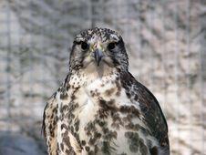 Free Bird Portrait Stock Image - 4556341