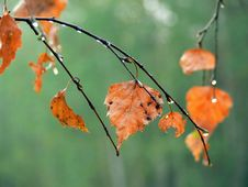 Free Autumn Leaves Stock Photos - 4556363