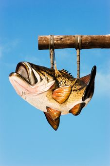 Free Bass Fish Hanging Royalty Free Stock Photos - 4557158