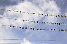 Pigeons On Electrical Wire Stock Photos
