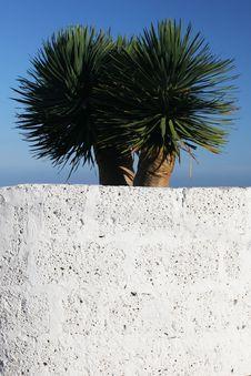 Free Dracaena Plant Stock Image - 4557531