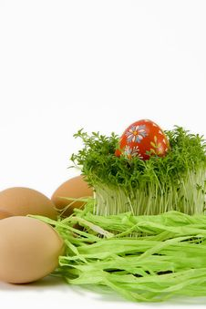 The Red Egg With Cress Stock Image
