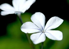 Free Nameless Flower Stock Image - 4558151