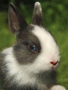 Free Easter Bunny Stock Photo - 4558620