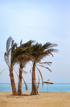 Free Palms On The Beach Stock Photos - 4558873