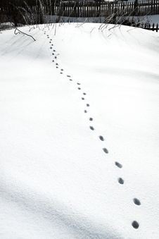 Free Animal Steps On The Snow Royalty Free Stock Images - 4559239