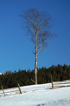Free Tree Stock Photography - 4559352