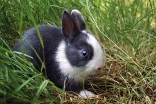 Free Easter Bunny. Stock Images - 4559674