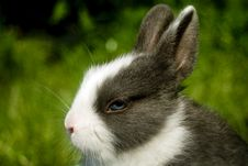 Free Easter Bunny Royalty Free Stock Photo - 4559905