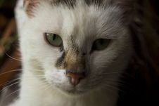 Free Beautiful Cat Royalty Free Stock Images - 45569979