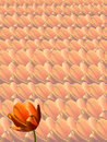 Free Tulips Background Royalty Free Stock Images - 4560269