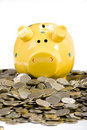 Free Piggy Bank Standing On Coins Royalty Free Stock Photo - 4562275