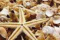 Free Potpourri With Starfish Royalty Free Stock Photos - 4564128