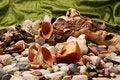 Free Amber And Seashells Stock Photos - 4566333