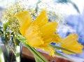 Free Yellow Tulips Stock Photos - 4567803
