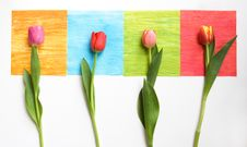 4 Tulips On 4 Squares - Colorful Stock Photos