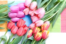 Free Lots Of Colorful Tulips In A Circle Royalty Free Stock Photos - 4560388