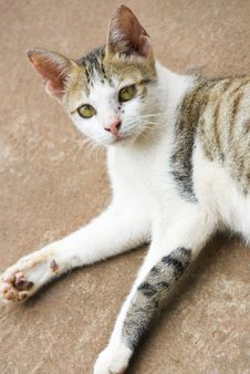 Free Countryside Cat Stock Photo - 4561290
