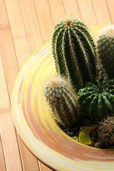 Free Cactus Royalty Free Stock Image - 4561586