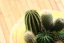 Free Cactus Stock Image - 4561591