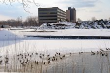 Waterfowl In Snowy Landscape Royalty Free Stock Images