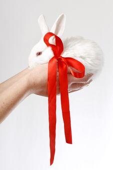 Free Bunny Stock Photo - 4562790