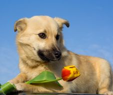 Free Puppy Dog With Tulip Royalty Free Stock Photos - 4564118