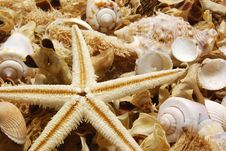 Free Potpourri With Starfish Royalty Free Stock Photos - 4564128