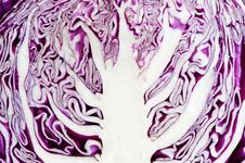 Free Red Cabbage Section Royalty Free Stock Photography - 4564497