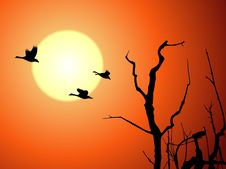 Free Wild Goose And Tree In Sunset Royalty Free Stock Images - 4566279