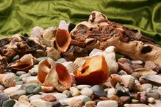 Free Amber And Seashells Stock Photos - 4566333