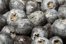 Free Fresh Blueberry With Water Dro Royalty Free Stock Images - 4566709