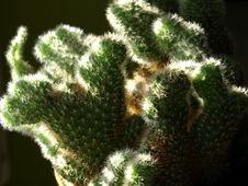 Free Cactus Royalty Free Stock Photos - 4566998