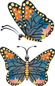 Free Colorful Butterfly Stock Image - 4567181