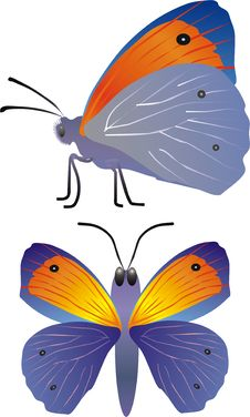 Free Blue And Orange Butterfly Royalty Free Stock Images - 4567199