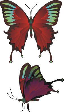 Free Elegant Dark Butterfly Stock Photography - 4567212