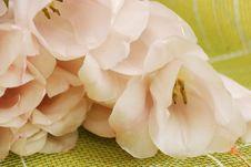 Free Tulip Royalty Free Stock Image - 4567826