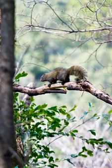 Free Wild Squirrel Stock Image - 4569311