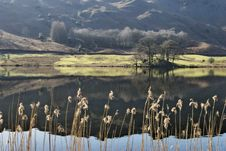 Free Reeds On Rydal Water Royalty Free Stock Photos - 4569518